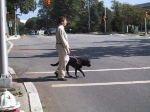 Man with dog guide crossing street